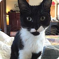 Adopt A Pet :: Sabrina - Horsham, PA