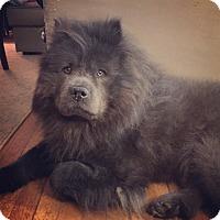 Adopt A Pet :: BLAZE aka BRYCE - Dix Hills, NY