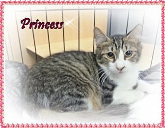 Domestic Mediumhair Cat for adoption in Orange City, Florida - Princess