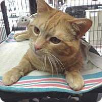 Adopt A Pet :: Charlie - Queens, NY