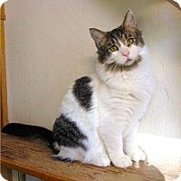 Adopt A Pet :: William - Davis, CA
