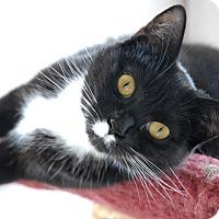 Adopt A Pet :: Janet - Winchendon, MA