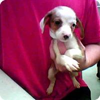 Adopt A Pet :: COLA - Conroe, TX