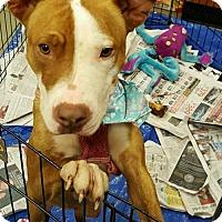 Adopt A Pet :: Trixie - Pembroke, GA