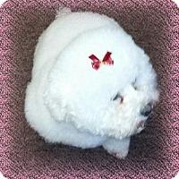 Adopt A Pet :: Pending!! Meeka - WA - Tulsa, OK