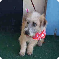 Adopt A Pet :: Jasper - Simi Valley, CA