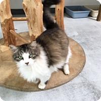 Adopt A Pet :: Harley - Diamond Springs, CA