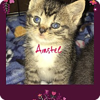 Adopt A Pet :: Amstel
