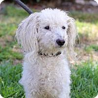Adopt A Pet :: Rainier - San Diego, CA