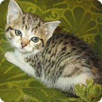 Adopt A Pet :: *APPLE - Upper Marlboro, MD