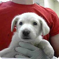 Adopt A Pet :: SNOWMAN - Conroe, TX