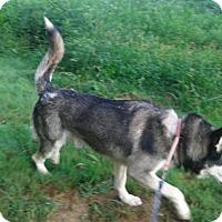 Adopt A Pet :: Kermit - Augusta County, VA