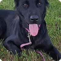 Adopt A Pet :: Maggie - Huntsville, TN
