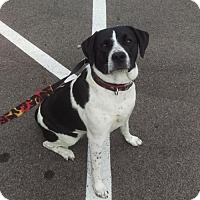 Adopt A Pet :: Daisy - Mt. Gilead, OH