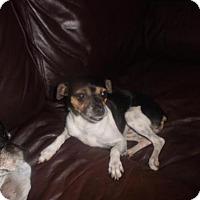 Adopt A Pet :: Jill - Parker Ford, PA