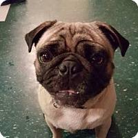 Adopt A Pet :: Newt - Bellbrook, OH