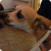 Adopt A Pet :: Gatsby - Centerville, GA