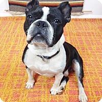 Adopt A Pet :: Felipe - Courtland, AL