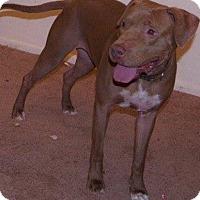 Adopt A Pet :: Christmas - Phoenix, AZ
