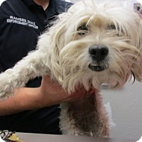 Adopt A Pet :: 66080 - Nogales, AZ