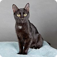 Adopt A Pet :: Anastasia - Wilmington, DE