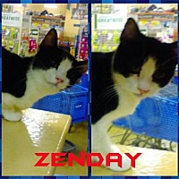 Adopt A Pet :: ZENDAY - Lawton, OK