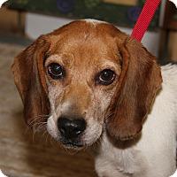 Adopt A Pet :: Allie - Marietta, OH