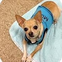 Adopt A Pet :: Romeo - Mesa, AZ