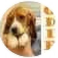 Adopt A Pet :: Odie - Pembroke Pines, FL