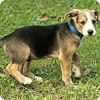 Adopt A Pet :: Walker - Staunton, VA