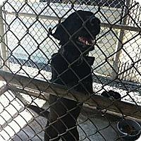 Adopt A Pet :: Lady - Donaldsonville, LA