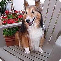 Adopt A Pet :: Dan Dan - San Diego, CA
