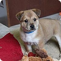 Adopt A Pet :: ACHILLES - Loxahatchee, FL