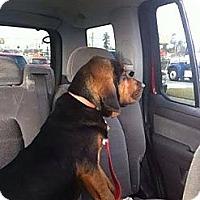 Adopt A Pet :: Otis! Puppy! - St, Augustine, FL