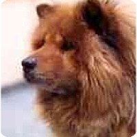 Adopt A Pet :: Mafusa--Courtesy - Columbus, OH