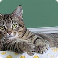Adopt A Pet :: Shylo - Douglas, ON