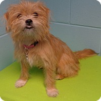 Adopt A Pet :: Lilly - Orlando, FL