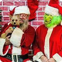 Adopt A Pet :: Klondike - Austin, TX