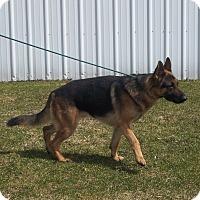 Adopt A Pet :: SARGE - Tully, NY