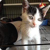 Adopt A Pet :: Macy - Island Park, NY