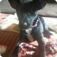 Adopt A Pet :: Kat - Burlington, NJ