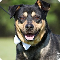 Adopt A Pet :: Jack - Schererville, IN