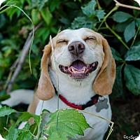Adopt A Pet :: Ned - Salt Lake City, UT
