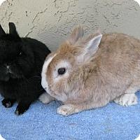 Adopt A Pet :: Kyle & Allan - Bonita, CA