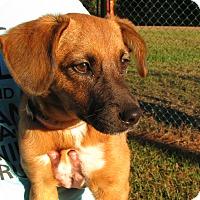 Adopt A Pet :: Ariel - Groton, MA