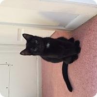 Adopt A Pet :: Jasiri - McHenry, IL