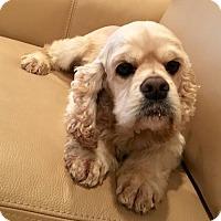 Adopt A Pet :: Mikey - Flushing, NY