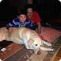 Adopt A Pet :: Emma - Phoenxville, PA