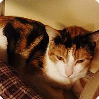 Adopt A Pet :: Bubbles - Franklin, NH