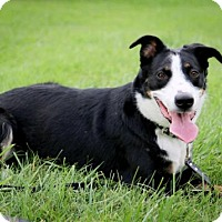 Border Collie Mix Dog for adoption in Omaha, Nebraska - JoJo